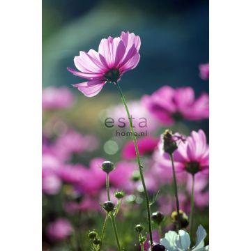 papier peint panoramique fleurs sauvages rose de ESTA home