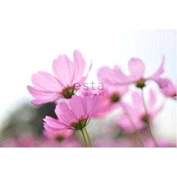 papier peint panoramique fleurs des champs rose de ESTA home