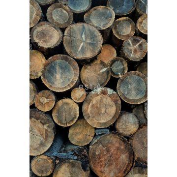 papier peint panoramique imitation bois marron de ESTA home