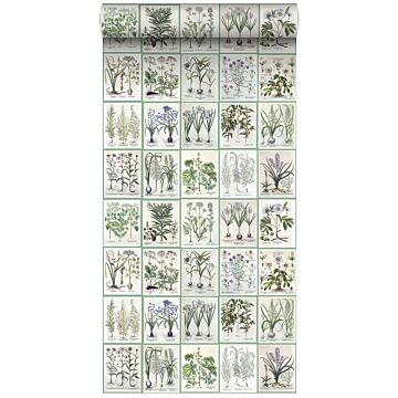 papier peint intissé XXL pages d'un livre botanique avec fleurs et plantes gris chaud clair et vert de ESTA home