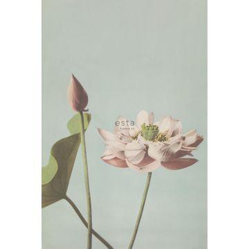 papier peint panoramique fleur de lotus vieux rose de ESTA home