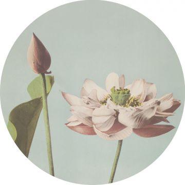 papier peint panoramique rond adhésif fleur de lotus rose clair et bleu gris de ESTA home