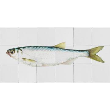 sticker mural poisson jaune et bleu de ESTA home