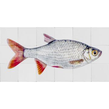 sticker mural poisson gris et rouge de ESTA home