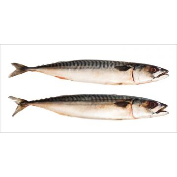 sticker mural des poissons gris de ESTA home