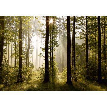 papier peint panoramique paysage boisé vert de Sanders & Sanders
